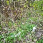 Zaśmiecony teren zielony